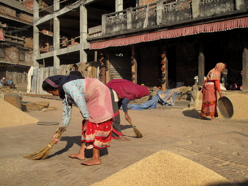 rice in square