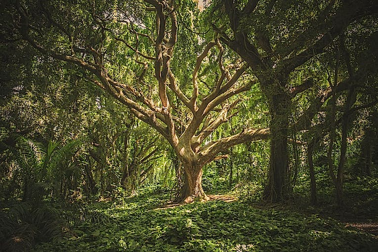 If a tree is man's life — changing nature of trees from a human viewpoint