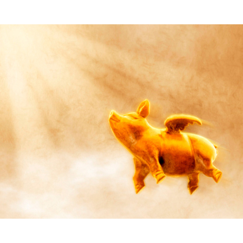 gold flying pig, sunburst