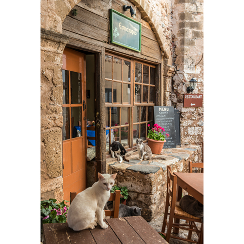 YO_Monemvasia_restaurant_cats_02