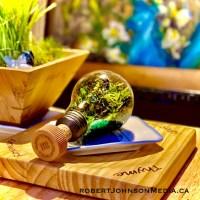 robert Johnson Glass Garden