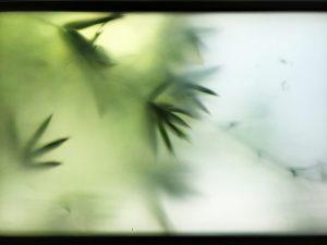 Palms and Window