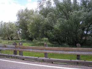 Modern day Lodgepole Creek.