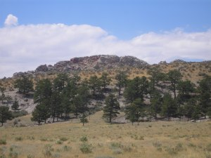 Lodgepole Pines at base of Laramie Range.