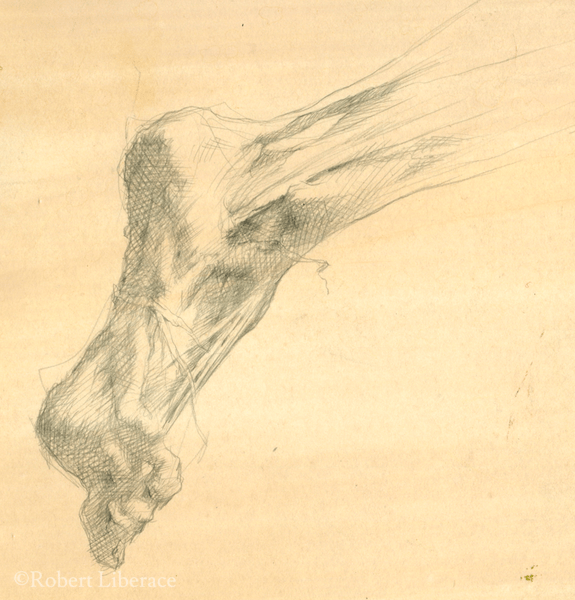 Robert Liberace, ecorche foot, silverpoint