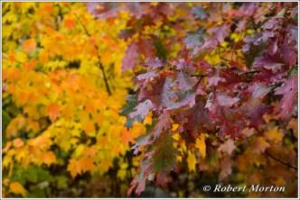 leaves-iv
