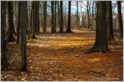 Laurier Woods Path 2