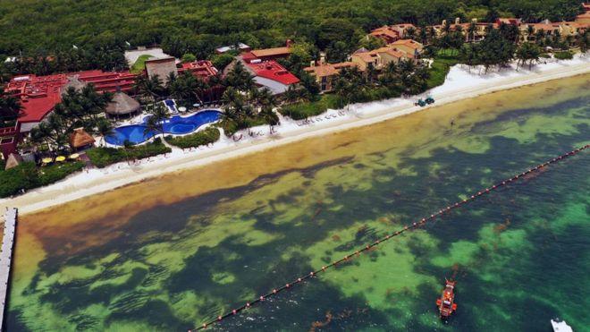 Cómo el sargazo que afecta el Caribe mexicano se convirtió en la floración de algas más grande del mundo