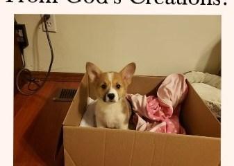 Mar 26 – So, We Got A Dog!