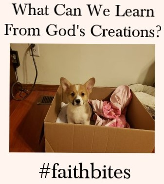 What can we learn from god's creations?