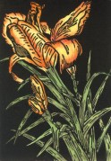 Wild Day Lily-Hand colored