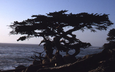 Tree by ocean