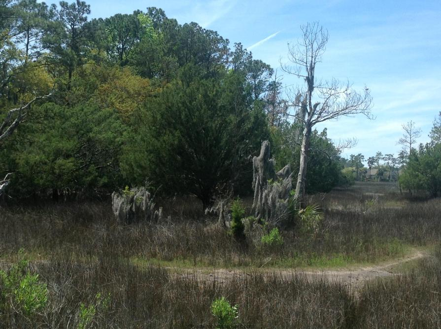 Skidway State  Park