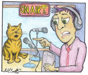 Radio-Meow-C300