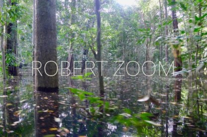 This photo shows trees and vegetation in the Amazon rainforest flooded by the Rio Negro