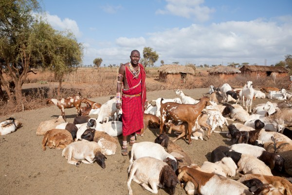 Young-massai-wih-goats,-village-in-background-000016268217_Full