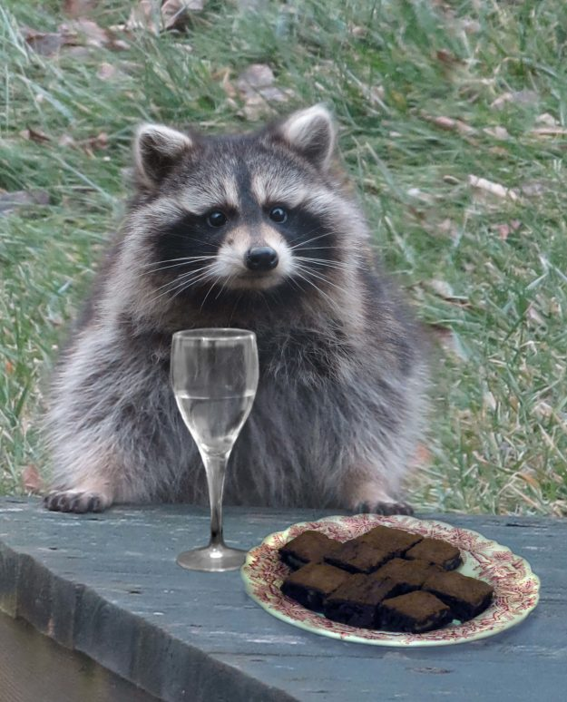 Signs from the Other Side -- In Ithaca, New York, Robin Botie Photoshops brownies and a glass of wine in front of a raccoon that sits, waiting on the deck of her home.