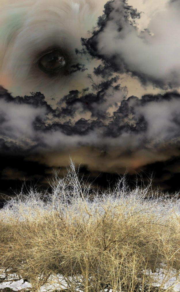 Robin Botie of Ithaca, New York, Photoshops her Havanese dog's eye in a landscape of fields and dark clouds.