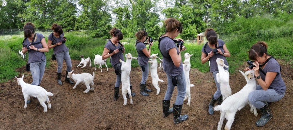 Robin Botie photoshops multiple images of herself dancing with baby goats. Original photos by Mary Jane Hetzlein of Ithaca, New York.