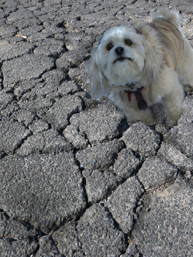 Robin Botie of Ithaca, New York, Photoshops her inherited dog Suki sinking in cracked concrete.