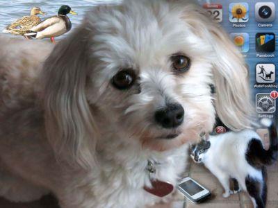 Robin Botie's Havanese dog stands over the cell phone that emits strange ringtones