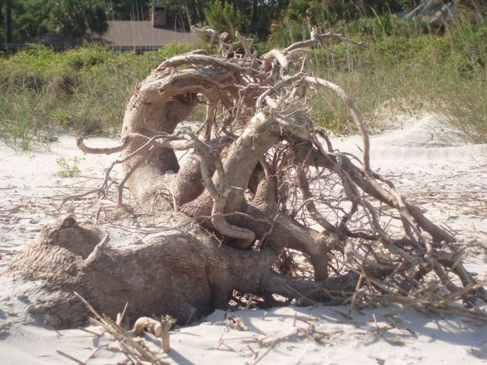 Beautiful driftwood