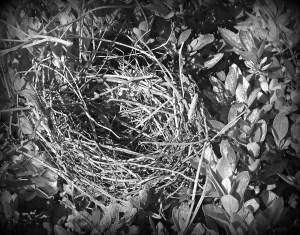 Empty Nest - Black and White