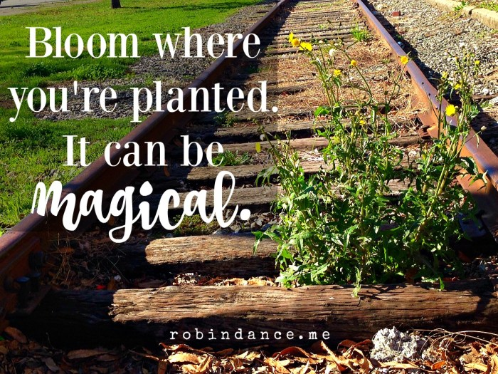 Bloom where you're planted image