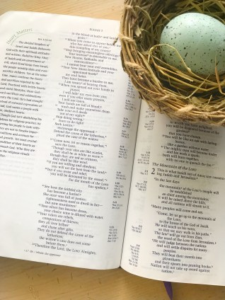 Bible and Nest