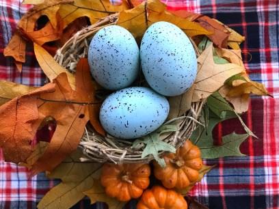 Ordinary Nest