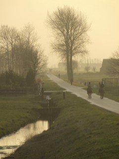 Horses in Holland_379505882_l