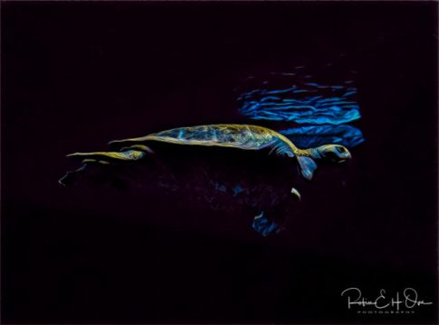 Night Glider © Robin E. H. Ove All Rights Reserved