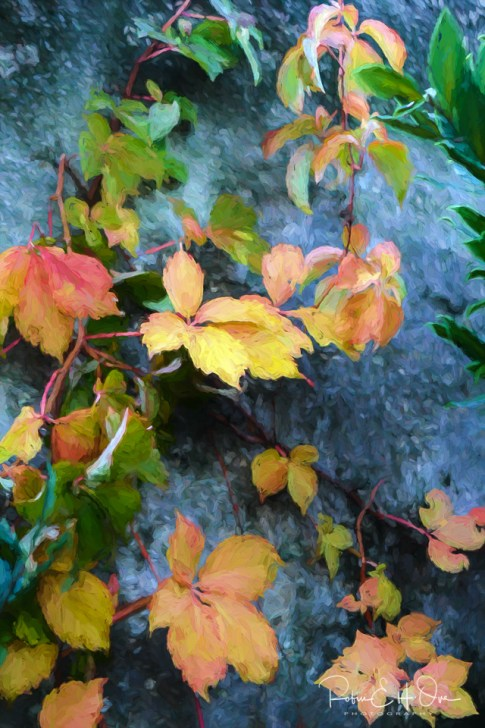 Fall Leaves © Robin E. H. Ove All Rights Reserved