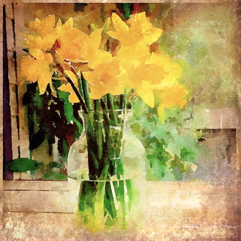 Daffodils in Window © Robin E. H. Ove All Rights Reserved