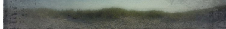 sea grass banner