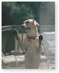 Pet screen is the solution to sliding door screens damaged by dogs, cats and other animals