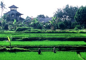 I move into a house in the midst of the rice paddies above the old artist village.