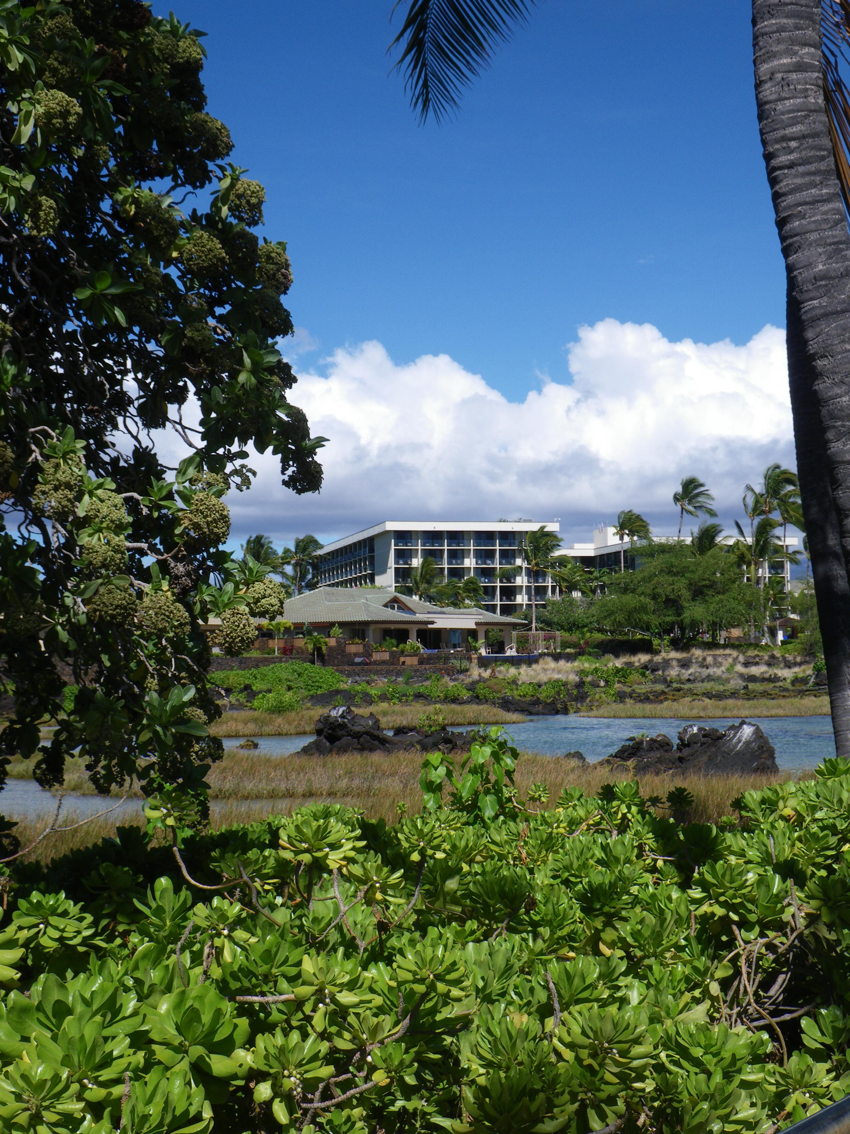 Waikoloa Beach Marriot and royal fishponds