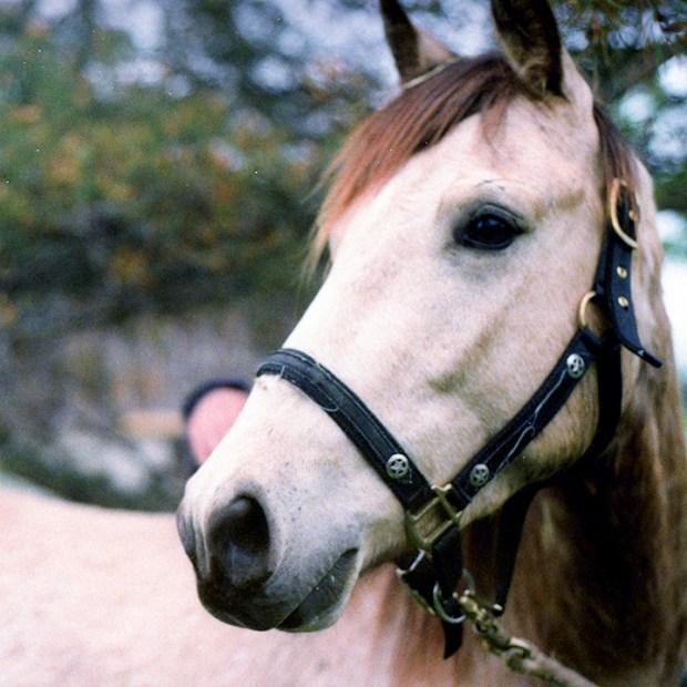 Horse Boarding in Toronto