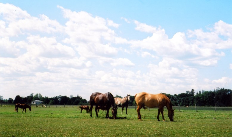 Horse Breeding Farms
