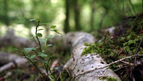 little wood DOF