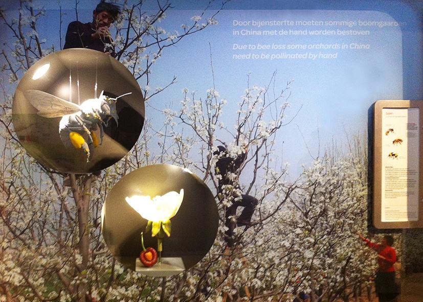 3D-geprinte honing-bij tentoongesteld in een vitrine in het insectarium van Artis.