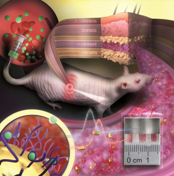 """""""Invisible Tattoo"""" Composed of Gold Nanoparticles"""