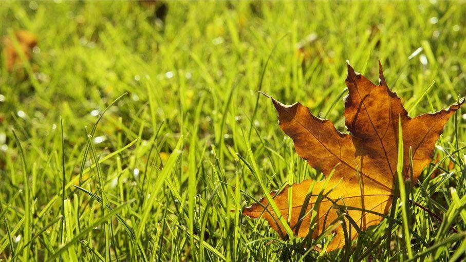 Cuidados del cesped en otoño