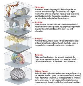 The levels of the brain, as outlined by the Human Brain Project, in an illustration