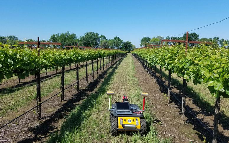 Husky UGV helps US grape growers conserve water