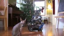 DarwinBot – roboten som leker med hunden