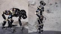 Tyska robotapan iStruct reser sig på två ben
