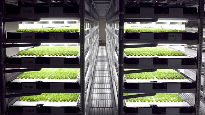 Spread-vertical-farm-trays.jpg.662x0_q70_crop-scale.jpg