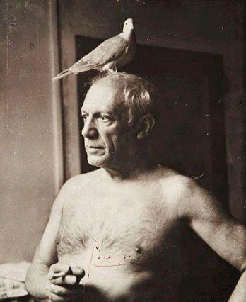Pan Picasso również zaprzyjaźniony z ptactwem